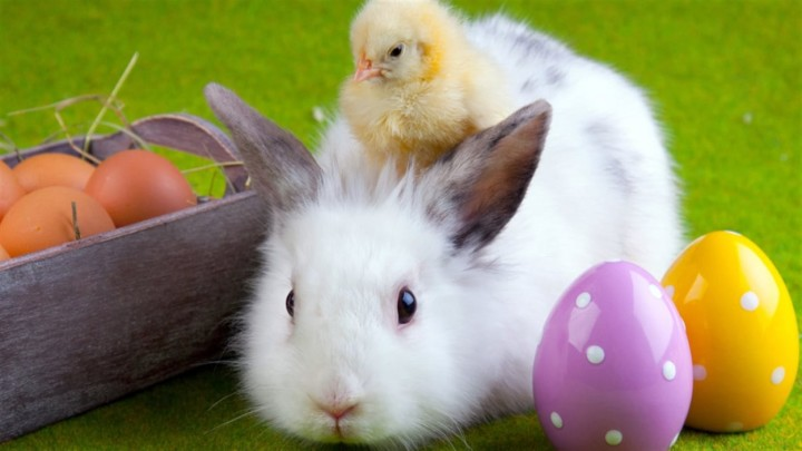 IS_150401_r91e4_paques_lapin_poussin_sn1250